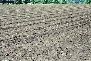 畑の画像1