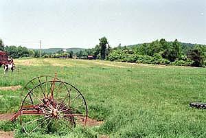 畑の画像2(牧草)