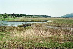 湿地の画像