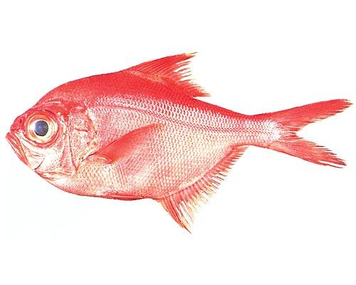 ナンヨウキンメ