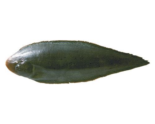 クロウシノシタ