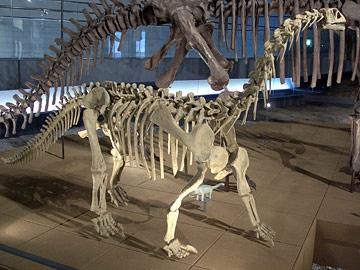 ベルサウルス・スイ