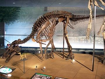 エドモントサウルスの全身骨格