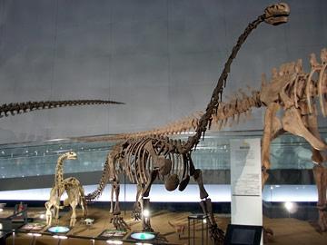 クンミンゴサウルス・ウディンゲンシス