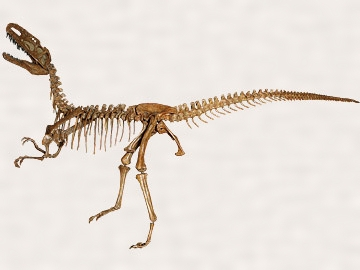 モノロフォサウルス・ジャンギ