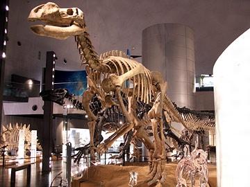 ムッタブラサウルス・ラングドニ