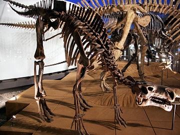 プロバクトロサウルスの一種