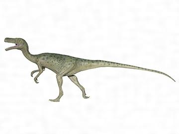 スタウリコサウルス・プリセイ