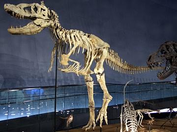 タルボサウルス・バタール