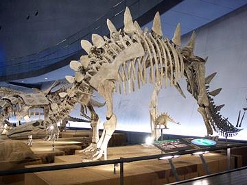 トウジャンゴサウルス・マルチスピナス