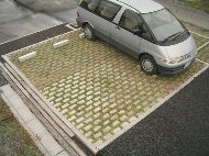 緑化系舗装
