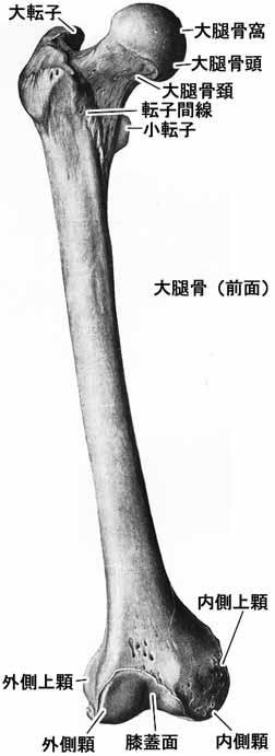 A02504001a.jpg (17629 バイト)