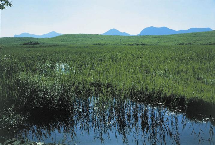 曽爾高原湧水群