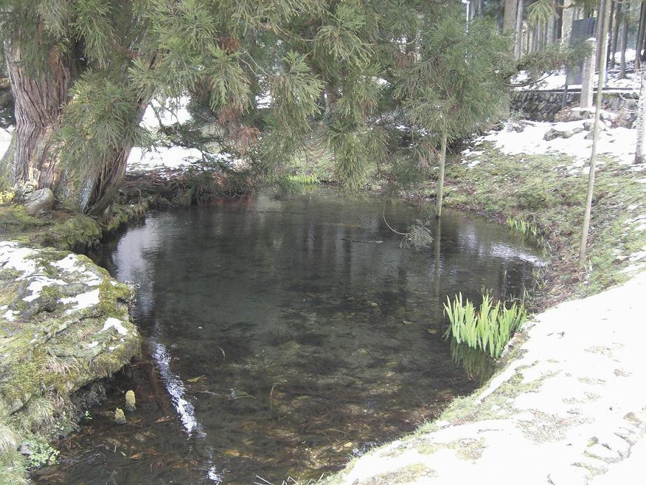 一本杉の湧水