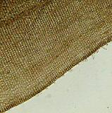 ウミウチワ