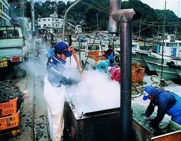 答志島和具浦漁港の塩ワカメづくり