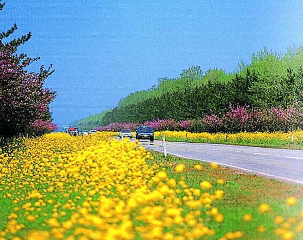 大潟菜の花ロード