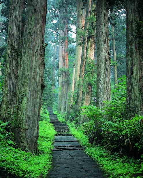 羽黒山南谷の蘚苔と杉並木