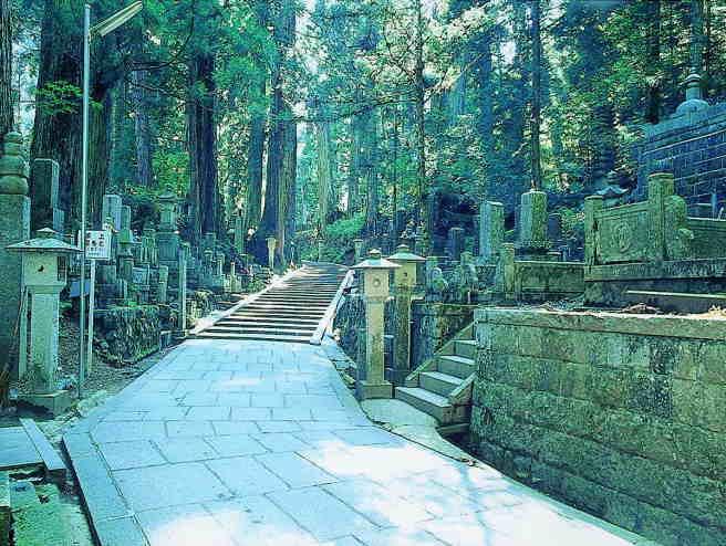 高野山奥之院の杉と線香
