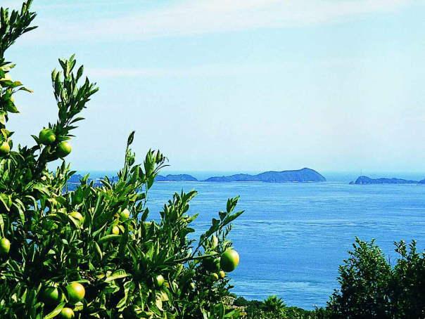 シトラスパーク瀬戸田の柑橘類