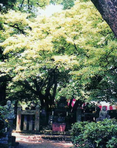 西条王至森寺の金木犀