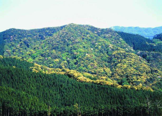 大学山の照葉樹林