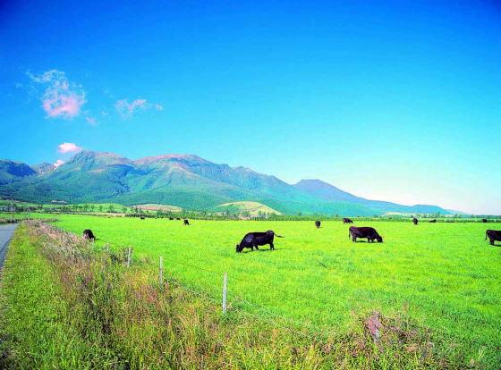 くじゅう四季の草原、野焼きのかおり