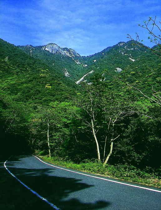 屋久島の照葉樹林と鯖節