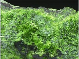 銅スクロドフスカ石