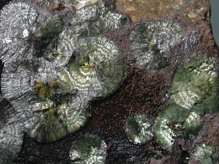 デュフレン石