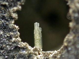 トリコス石