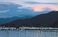 琵琶湖国定公園