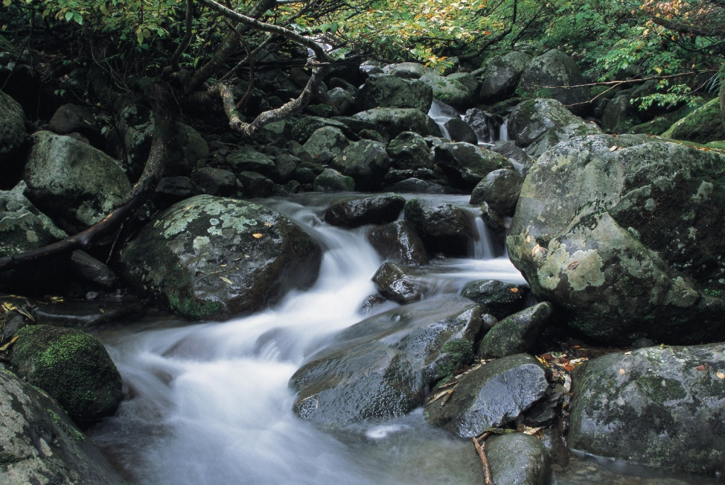 杜々の森湧水