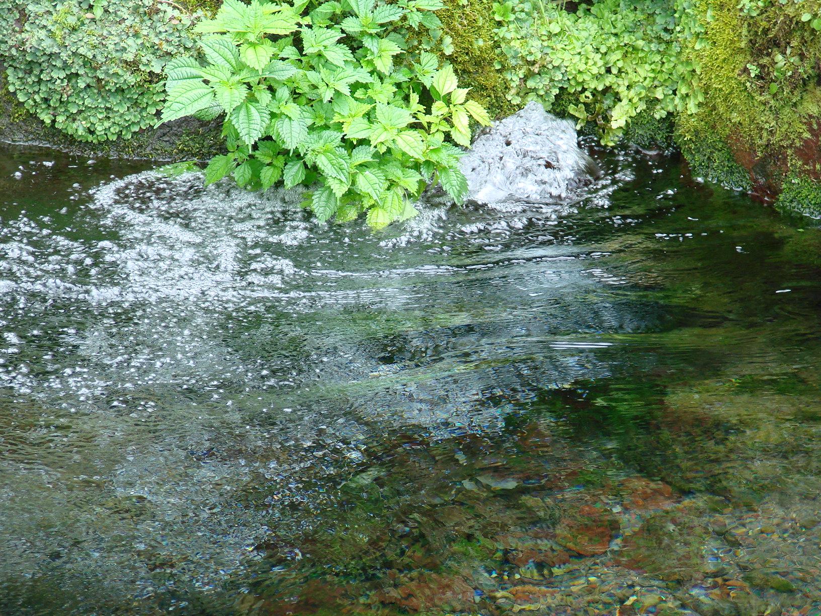 出の山湧水