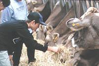 酪農教育ファーム