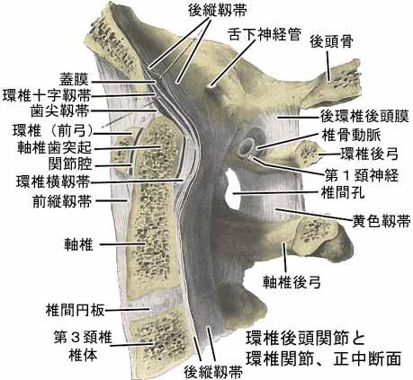 正中環軸関節