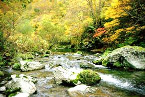 白神山系水沢川源流の森