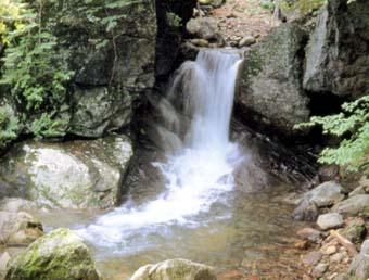 遠藤ヶ滝水源の森