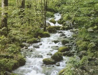 高原山水源の森
