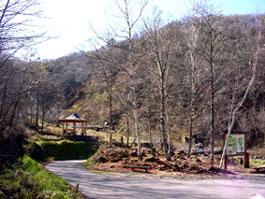 赤城水源の森