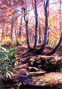 奧利根水源の森