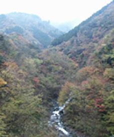 東丹沢県民の森