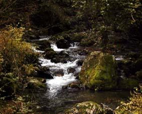 上根来水源の森