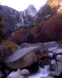 御岳昇仙峡水源の森