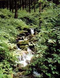大浅柄山水源の森
