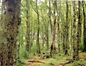 天城山水源の森