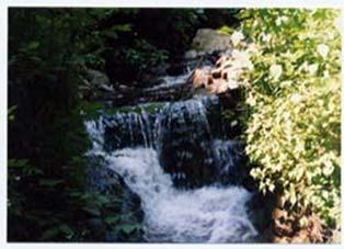 西教山水源の森