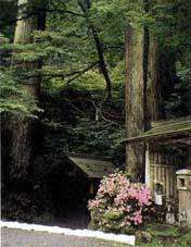 比叡山の森林