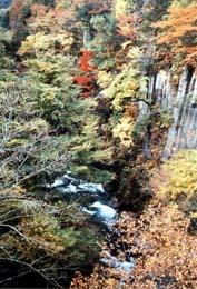 焼石連峰水源の森