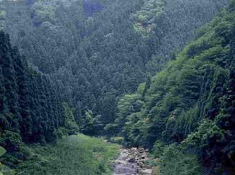 武地谷水源の森